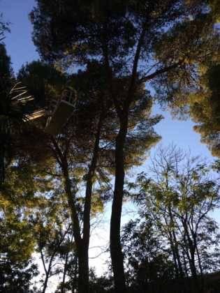 Campaña de poda y saneado del arbolado del parque municipal 59