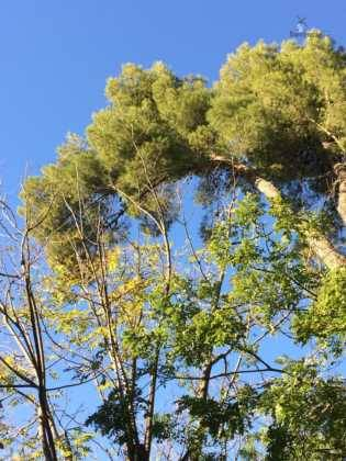 poda de arboles en parque municipal 90 315x420 - Campaña de poda y saneado del arbolado del parque municipal