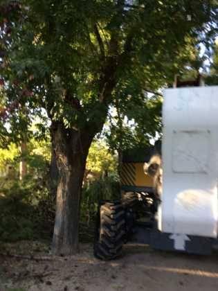 Campaña de poda y saneado del arbolado del parque municipal 66