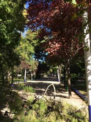 Campaña de poda y saneado del arbolado del parque municipal 68