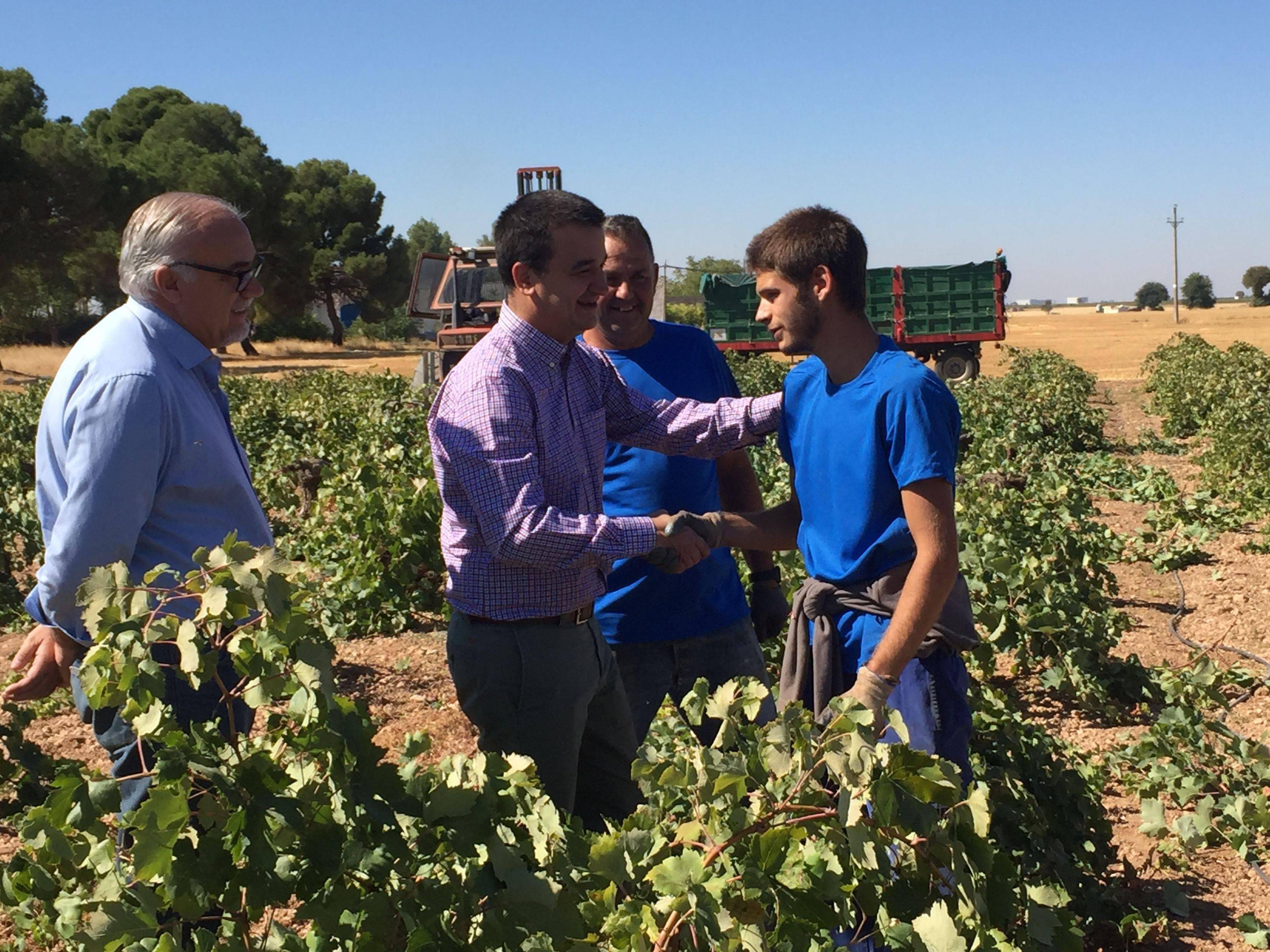 martinez arroyo en la vendimia - Gobierto regional ingresó cerca de 13 millones de euros por la reestructuración de su viñedo