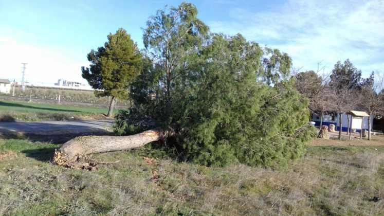 Árbol caído en Herencia por vientos en Febrero 2017. Foto Twitter alcalde
