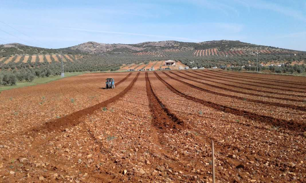 concurso de destreza de arado 2017 en herencia san isidro 2 1068x641 - Resultados del I Concurso de destreza de arado en Romería San Isidro