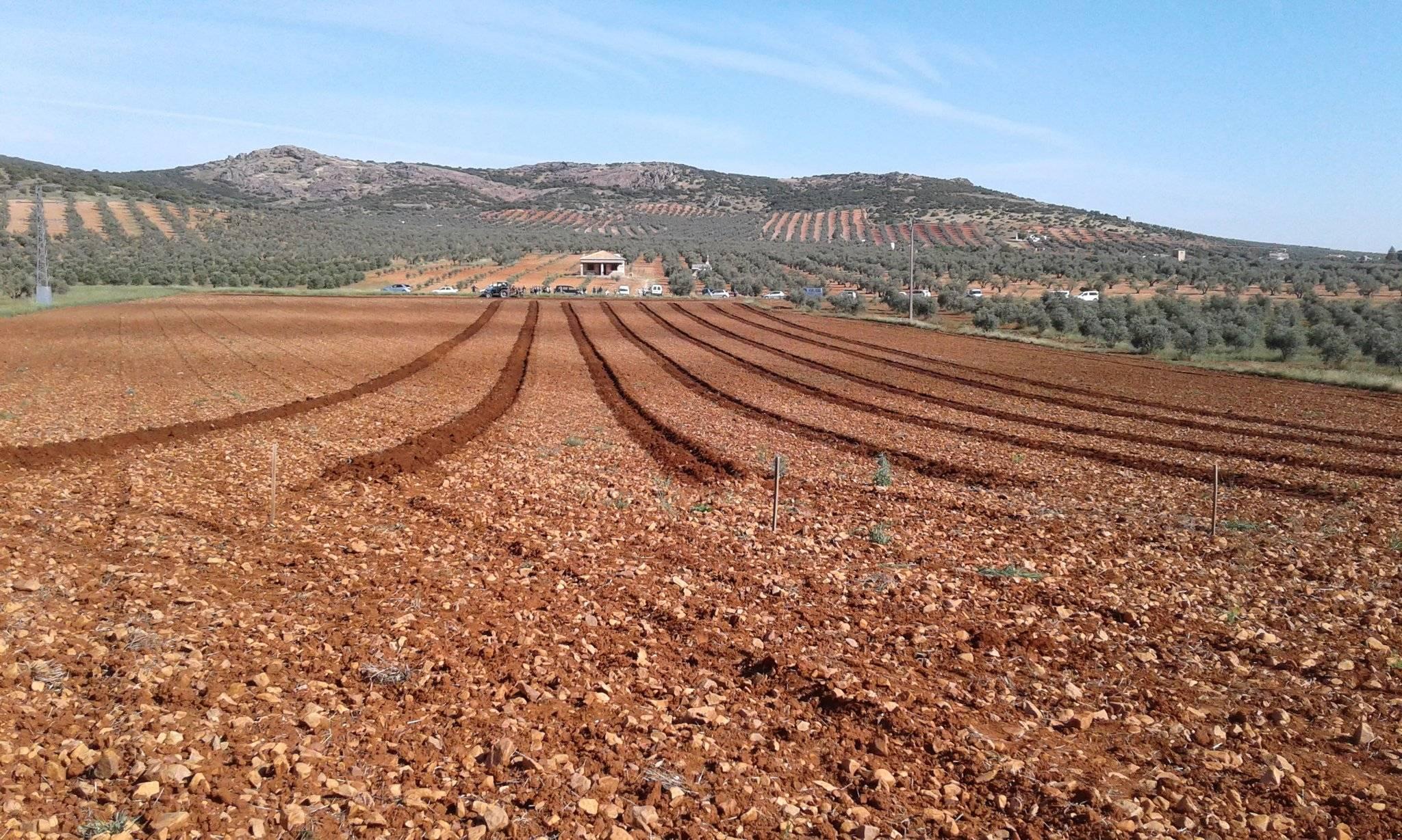 Resultados del I Concurso de destreza de arado en Romería San Isidro 11