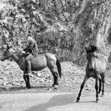 escenas de armenia 228x228 - Perlé llega a la antigua Persia