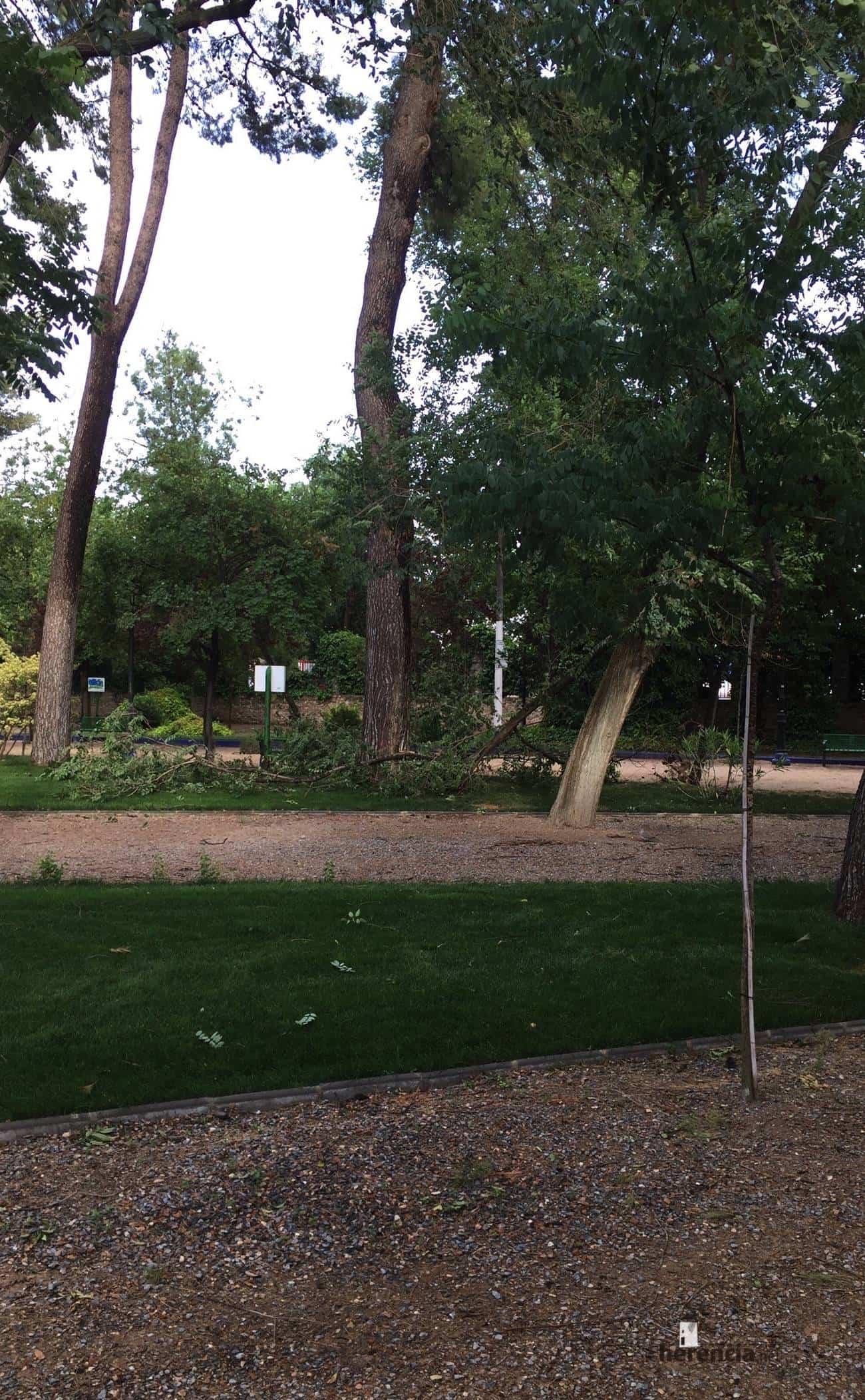 caida ramas tormenta viento herencia 1 - Tormentas en la tarde domingo y ramas caídas en el parque