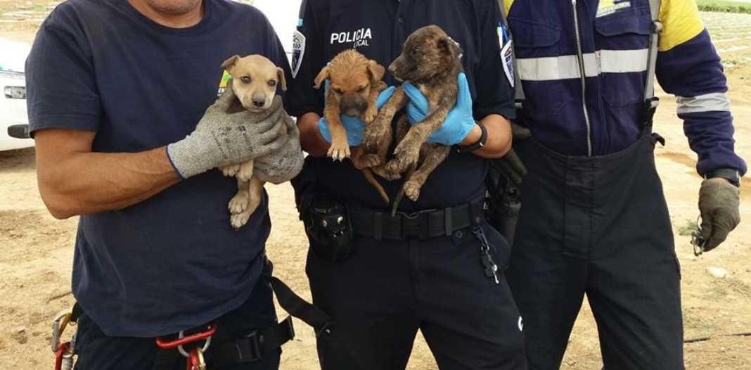 Rescate de cachorros en un pozo en Herencia (Ciudad Real) 7
