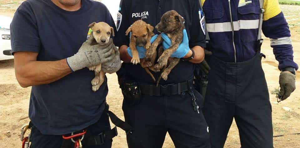rescate cachorros herencia bomberos policia local - Rescate de cachorros en un pozo en Herencia (Ciudad Real)
