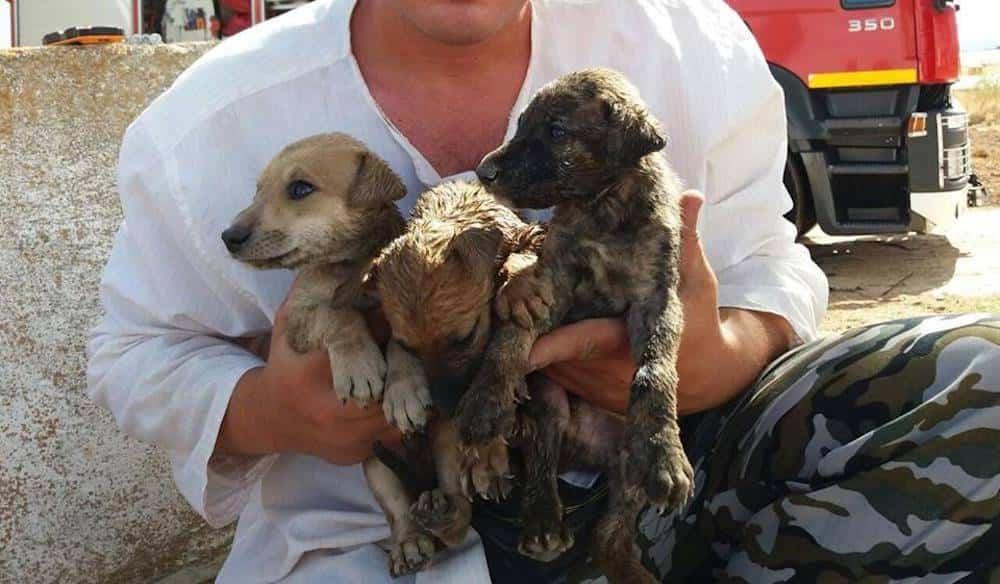 rescate cachorros herencia - Rescate de cachorros en un pozo en Herencia (Ciudad Real)