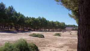 Parque Serna 2 300x169 - El Ayuntamiento de Herencia ilumina el pinar de La Serna en su 25 aniversario