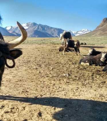 Perle atravesando el Pamir y llegando a Kirguistan31 373x420 - Perlé atravesando el Pamir y llegando a Kirguistán