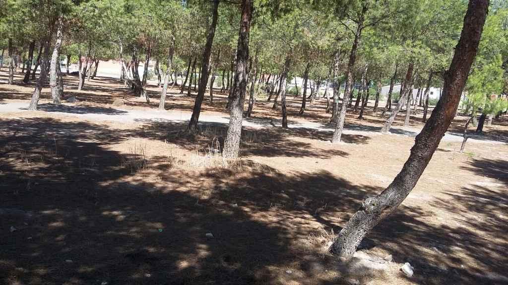 Serna - El Ayuntamiento de Herencia ilumina el pinar de La Serna en su 25 aniversario