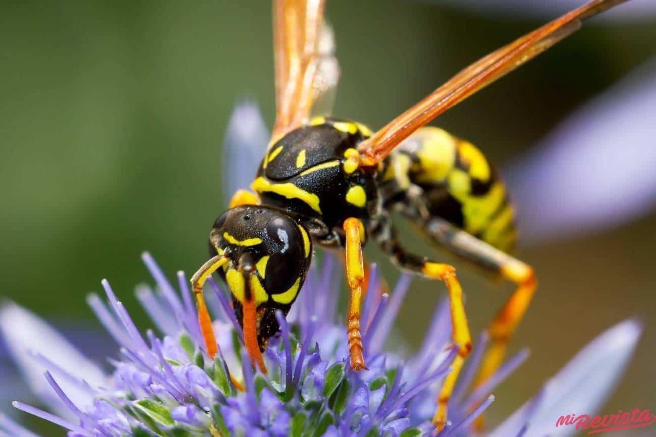 avispa en flor - Increíble truco para mantener alejadas a las avispas de tu hogar