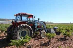 vendimia00 300x200 - La vendimia se adelanta hasta 20 días para algunas variedades.