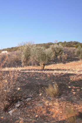 6 hectáreas afectadas por el fuego en Herencia 10