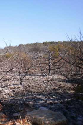 incendio en el paraje El Bombo de Herencia1 280x420 - 6 hectáreas afectadas por el fuego en Herencia