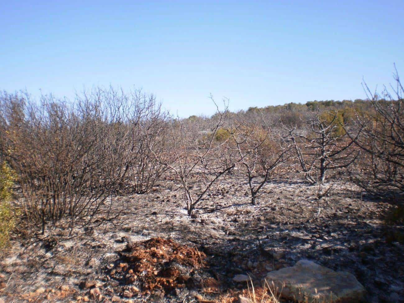 incendio en el paraje El Bombo de Herencia1 - 6 hectáreas afectadas por el fuego en Herencia