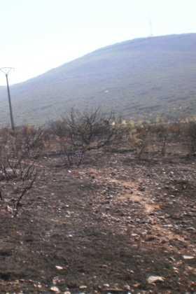 incendio en el paraje El Bombo de Herencia2 280x420 - 6 hectáreas afectadas por el fuego en Herencia