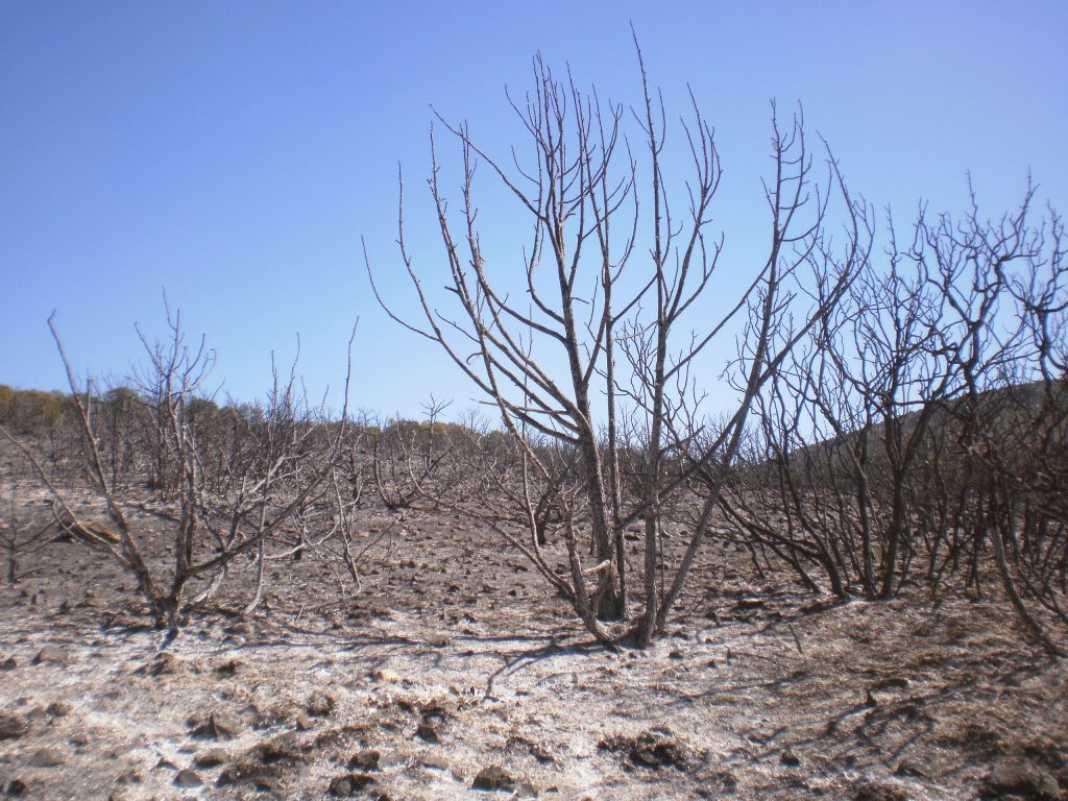 6 hectáreas afectadas por el fuego en Herencia 19