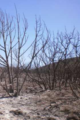 incendio en el paraje El Bombo de Herencia3 280x420 - 6 hectáreas afectadas por el fuego en Herencia