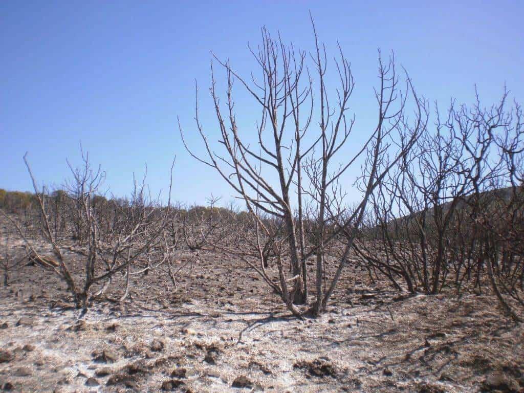 incendio en el paraje El Bombo de Herencia3 - 6 hectáreas afectadas por el fuego en Herencia