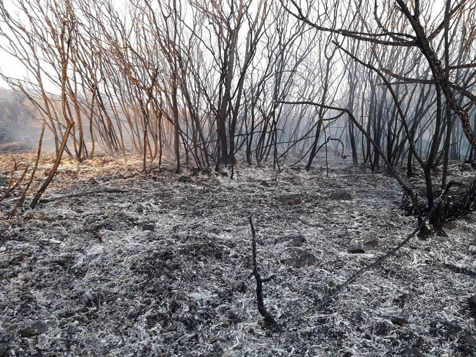 """incendio en sierra el bombo de Herencia 3 - Fotografías del incendio en la Sierra """"El Bombo"""" de Herencia"""