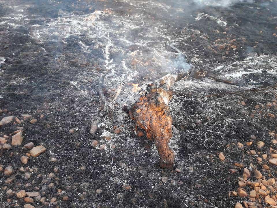 """Fotografías del incendio en la Sierra """"El Bombo"""" de Herencia 24"""