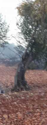 incendio en sierra el bombo de Herencia 5 158x420 - 6 hectáreas afectadas por el fuego en Herencia