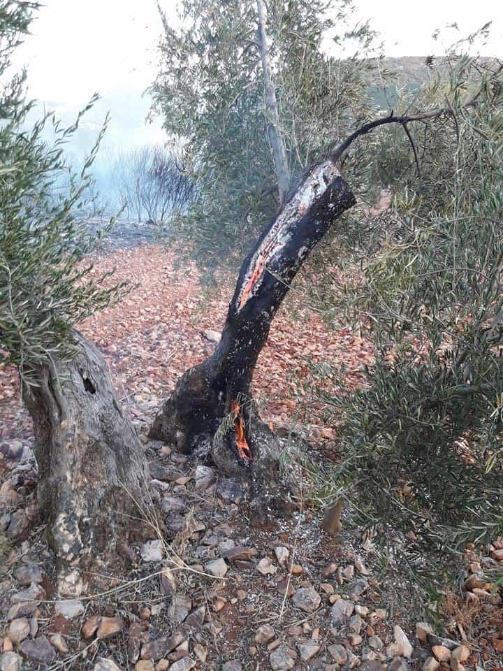 """incendio en sierra el bombo de Herencia 9 - Fotografías del incendio en la Sierra """"El Bombo"""" de Herencia"""