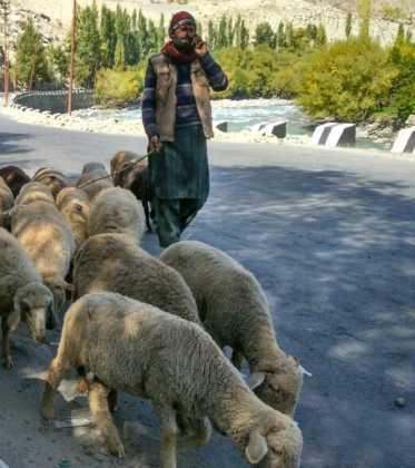 Perlé atravesando la singular Cachemira 79