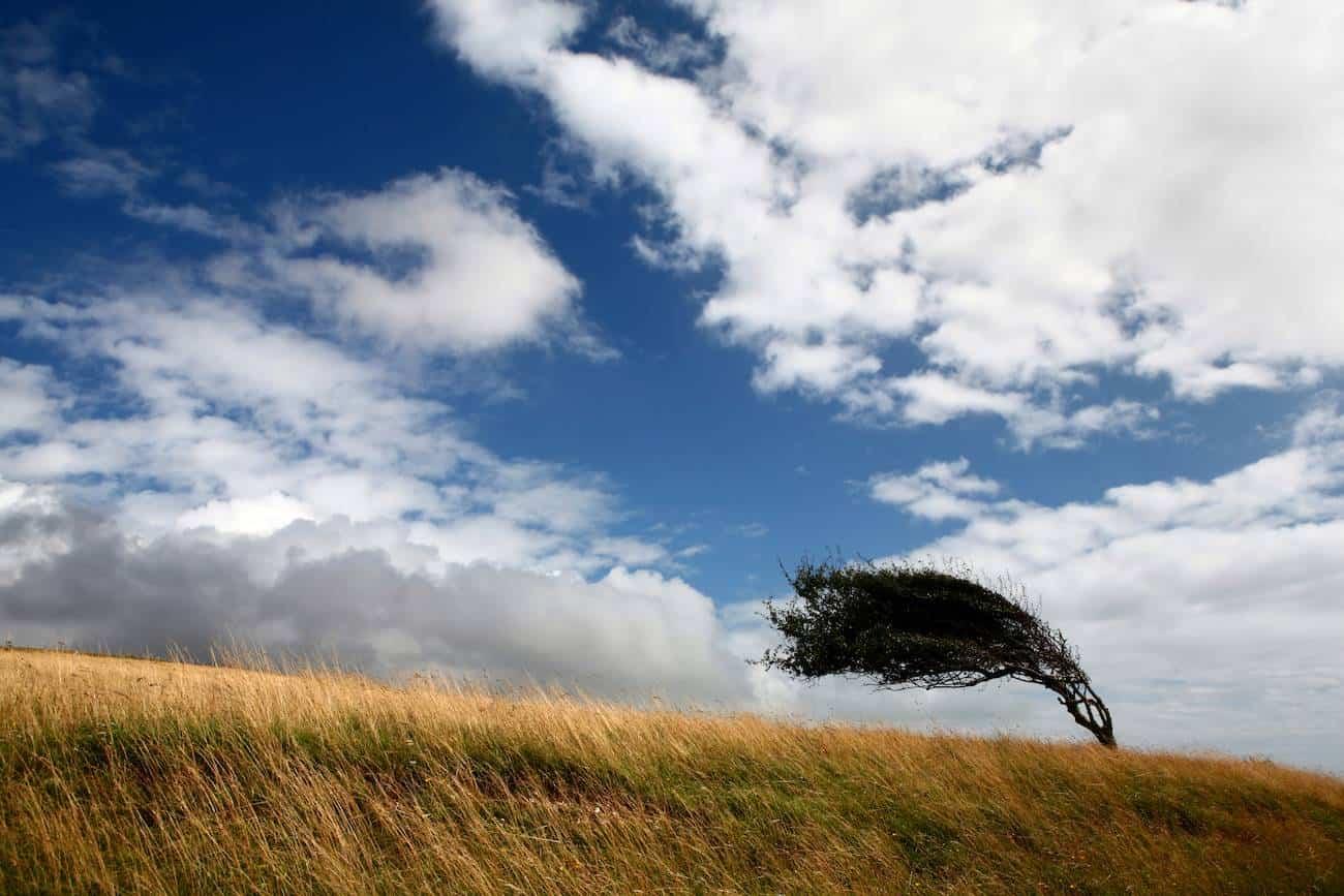 fuentes vientes - Activado el aviso naranja por fuertes vientos en Herencia