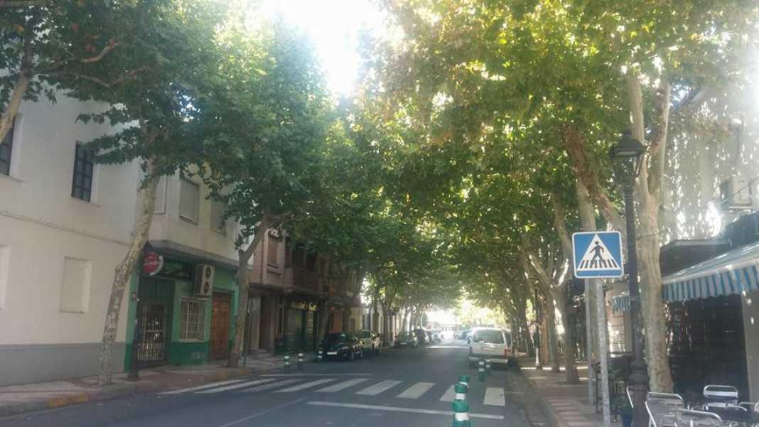 avenidad constitucion herencia 4 1068x601 - ¿Se talarán los plataneros de la Avenida de la Constitución en Herencia?