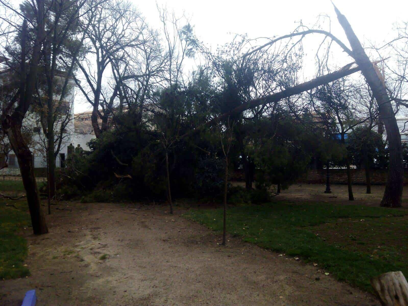 parque municipal herencia cerrado vientos - Parque Municipal cerrado por los daños ocasionados por el temporal