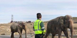 Un elefante muerto en un accidente en la A-30 en Albacete
