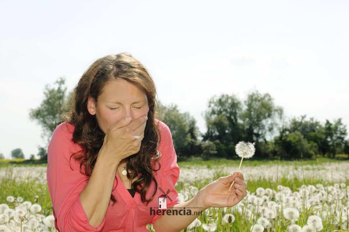 alergicos prado flores castilla la mancha - Esta primavera traerá mayores niveles de polen para los alérgicos