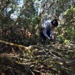 Éxito de la batida de limpieza del campo en Herencia ¡Galería actualizada! 4