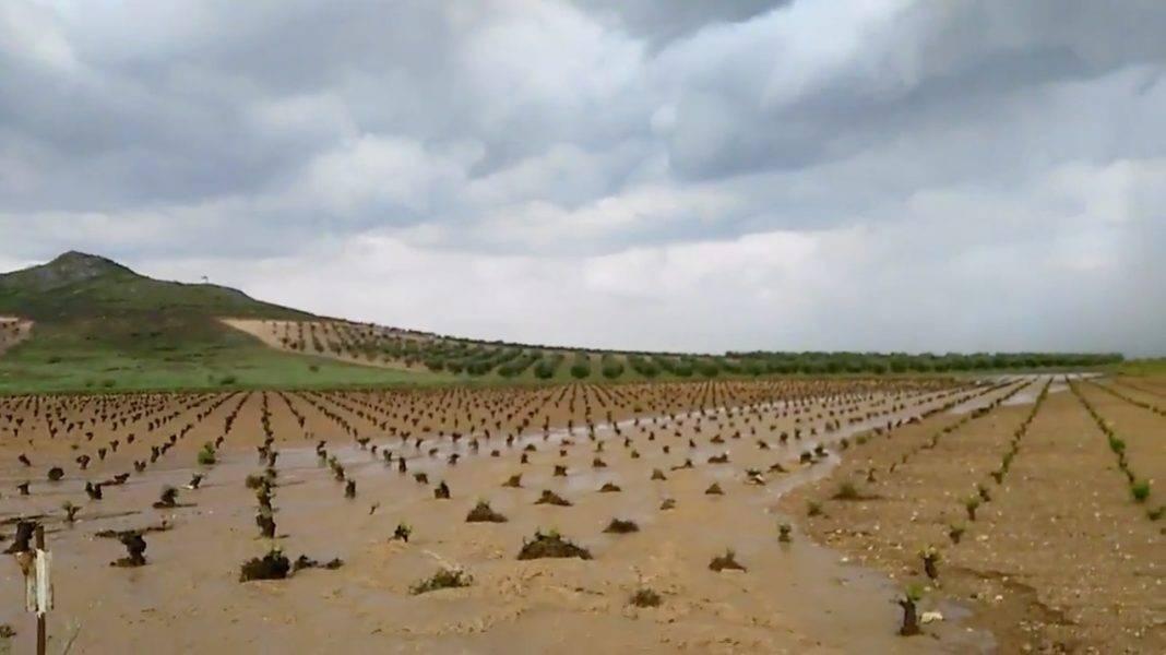 El agua corre por una viña de Herencia al lado del Pizacuelo 1