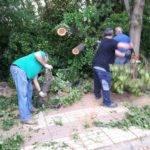 La tormenta de ayer dejó caídas de grandes ramas en la Avda. de Alcázar 6