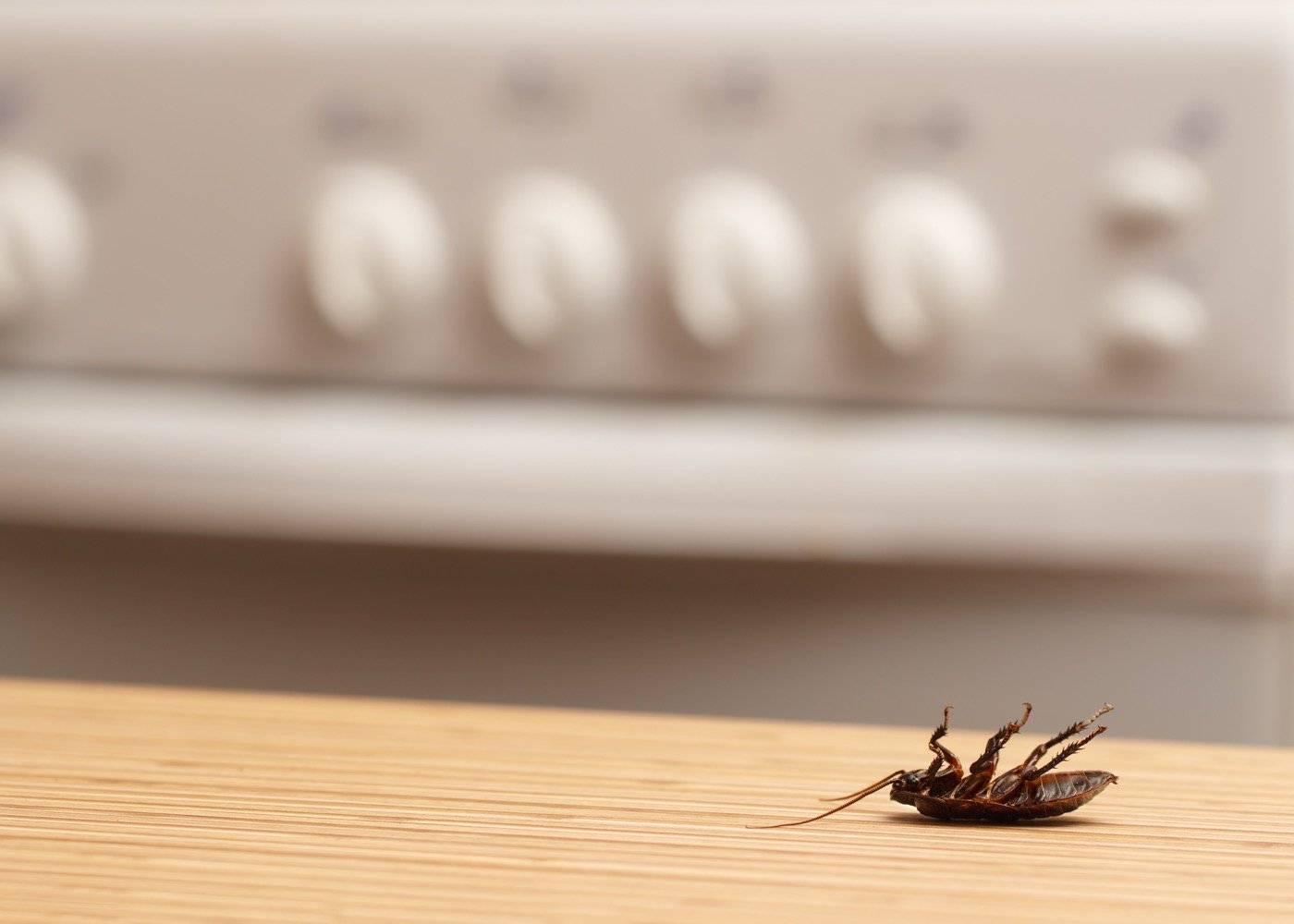 cucaracha muerta - ¿Dónde puedes comprar ácido bórico contra las cucarachas?