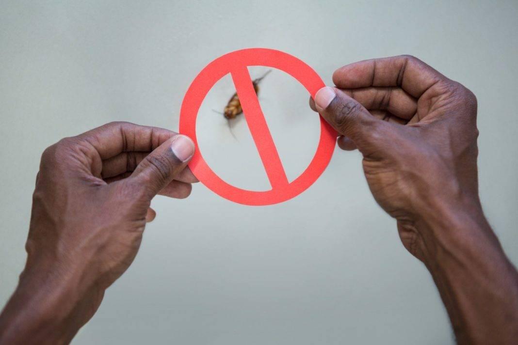 ¿Dónde puedes comprar ácido bórico contra las cucarachas? 3