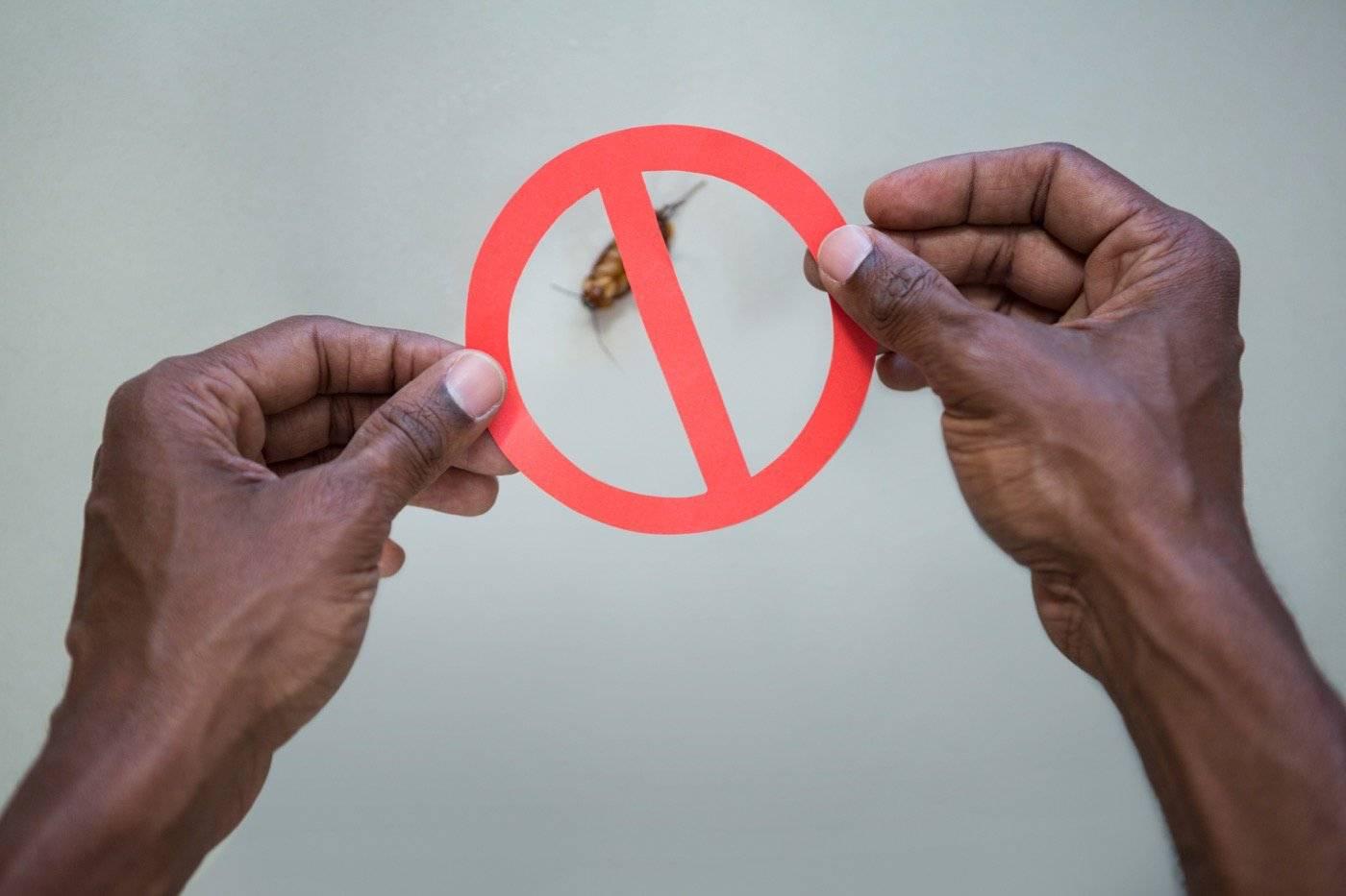 cucarachas prohibidas - ¿Dónde puedes comprar ácido bórico contra las cucarachas?