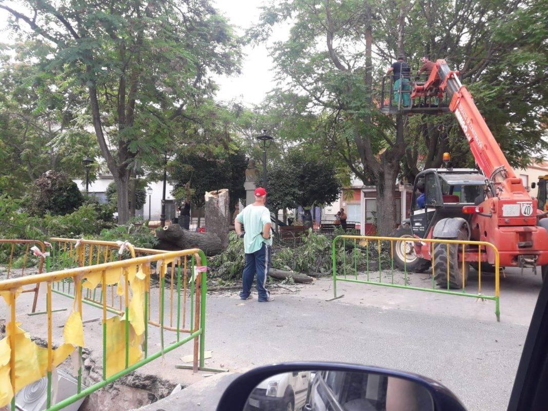 talando arboles plaza cervants herencia 1068x801 - Retirada de árboles de la Plaza Cervantes por seguridad