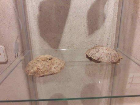 Patrimonio natural entorno y paraje de Herencia de la mano de Jesus Gomez 0022 457x343 - Inauguración de la exposición Patrimonio natural, entorno y paraje de Herencia