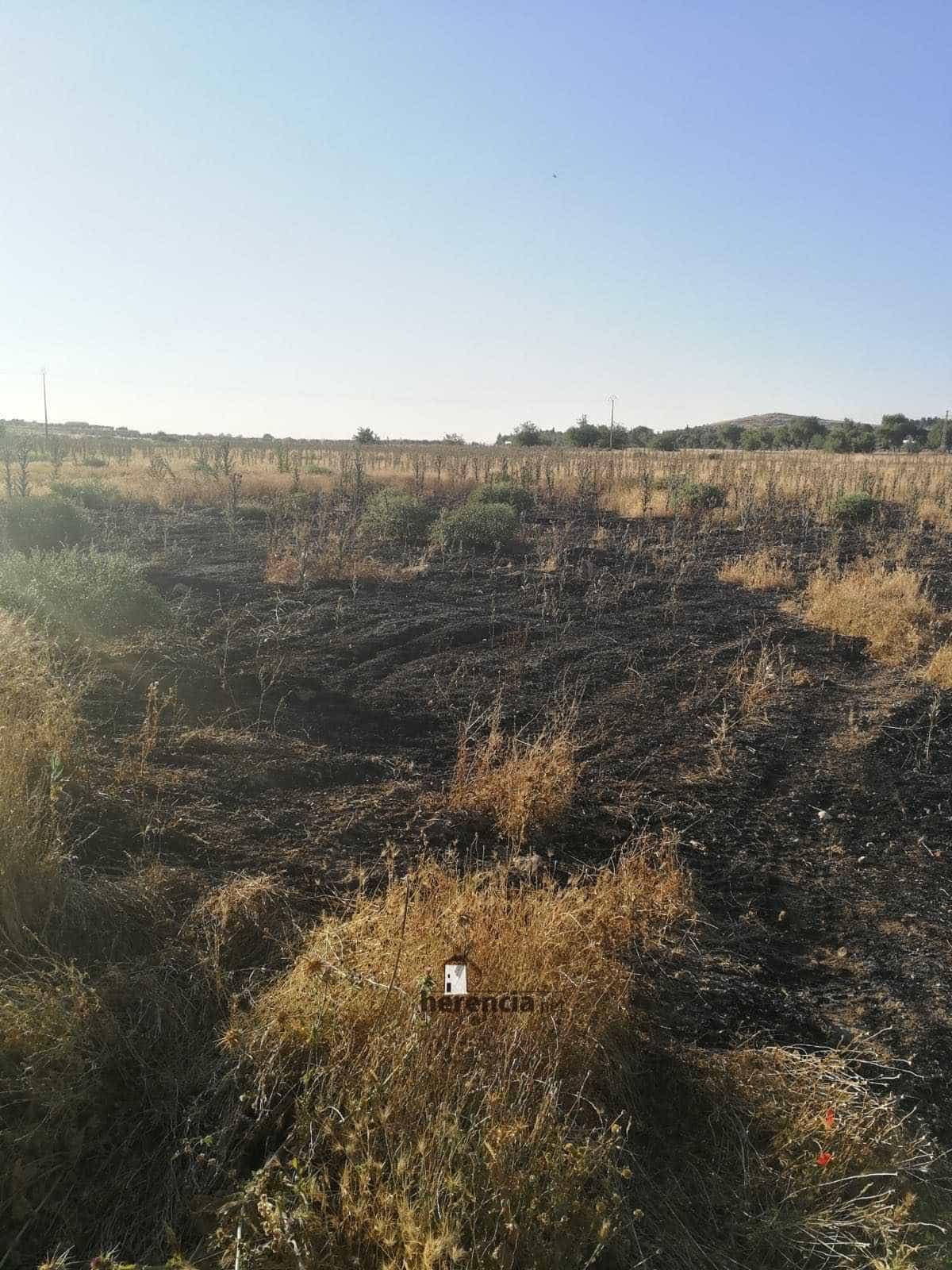 incendio extinguido en herencia cerca calle molinos 3 - Extinguido un incendio de la broza de una parcela en Herencia
