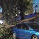 Fuertes rachas de viento provocan la caída de troncos y ramas 9