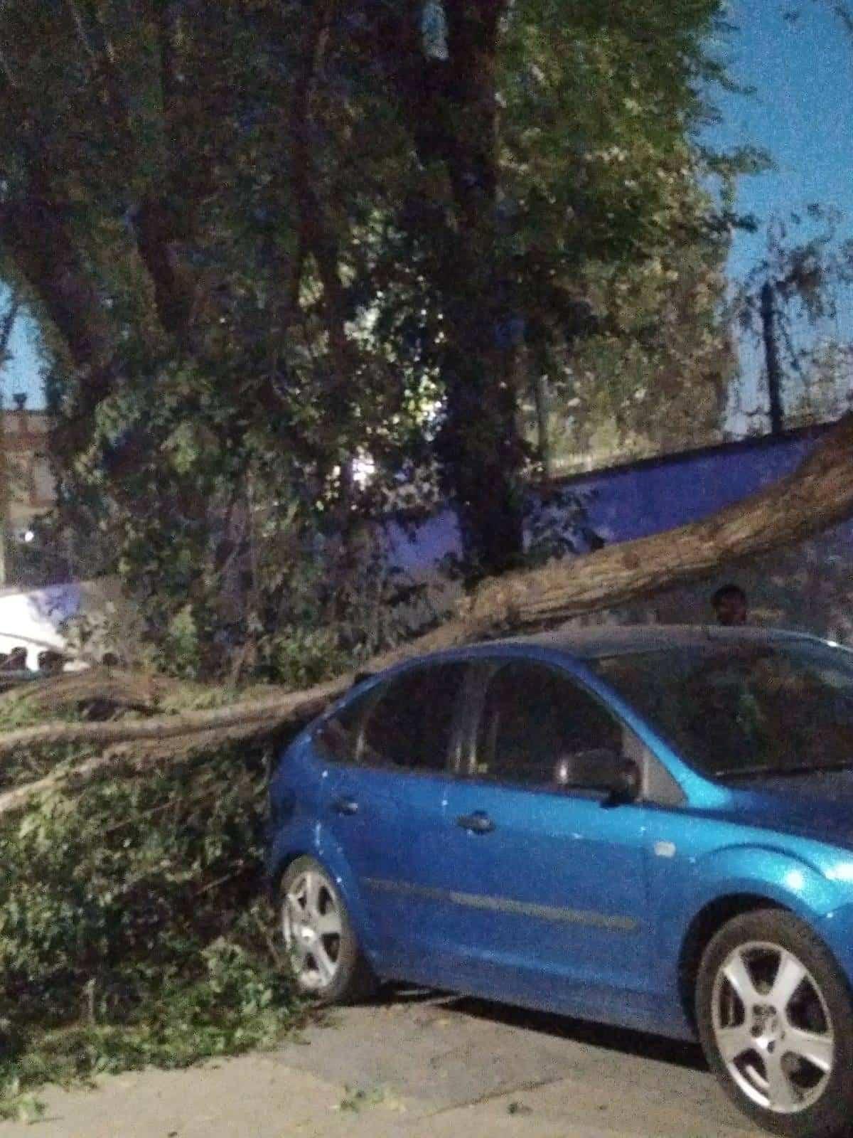caida de arboles por fuerte viento en herencia - Fuertes rachas de viento provocan la caída de troncos y ramas
