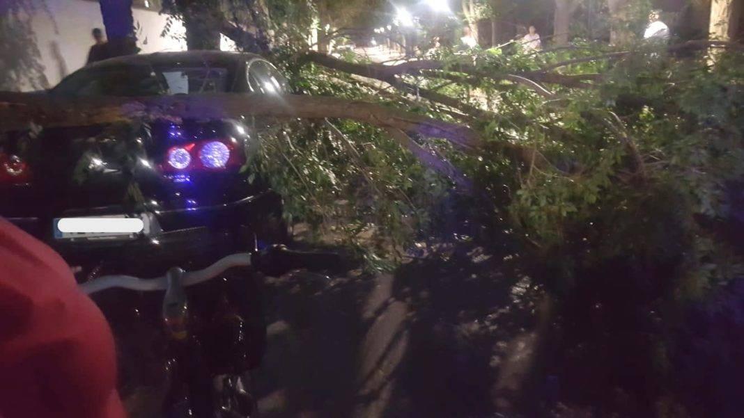 Fuertes rachas de viento provocan la caída de troncos y ramas 12