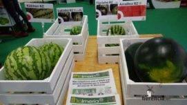 herencia en IV Feria Regional del Melon 7 271x152 - Herencia estuvo en el IV Feria Regional del Melón