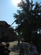 peregrinación parroquia de Herencia a Polonia17