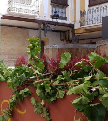 fiesta vendimia 2018 herencia 4 373x420 - DO La Mancha presente en la VI Fiesta de la Vendimia de Herencia